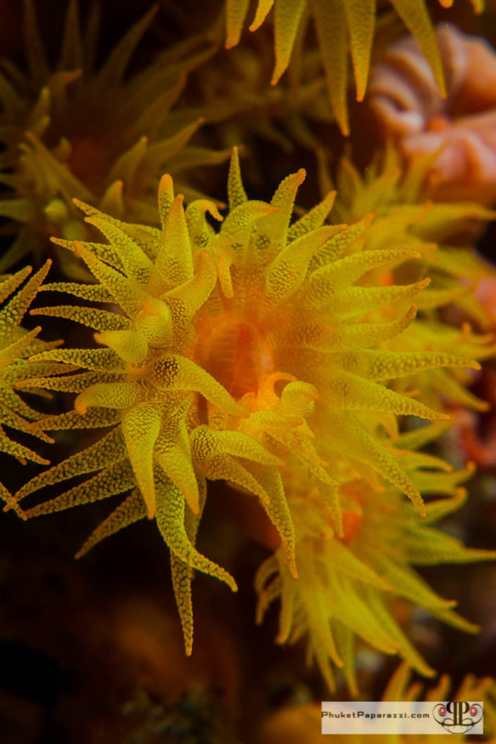 Underwater photography coral polyps yellow macro shot.