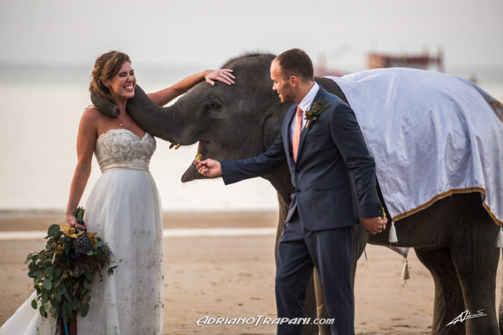 Wedding photography bride and groom with baby elephant.
